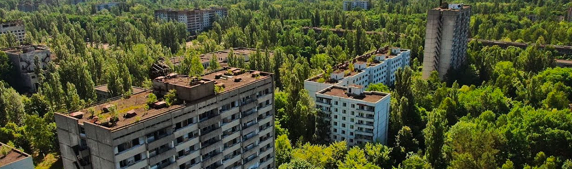 The zone of corruption: who needs the Chernobyl forests