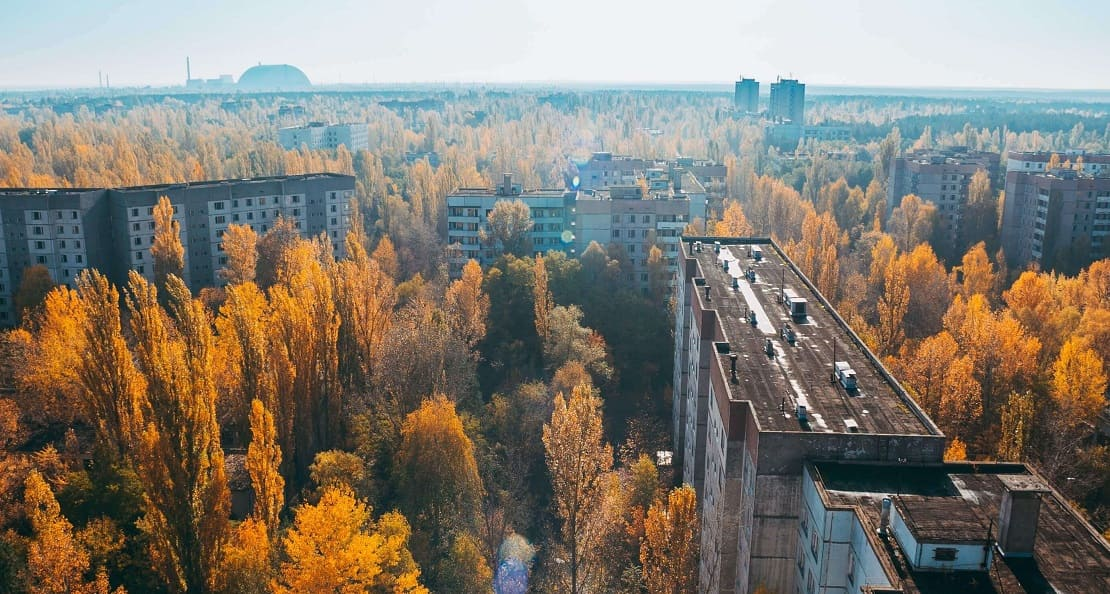 The red forest of Chernobyl